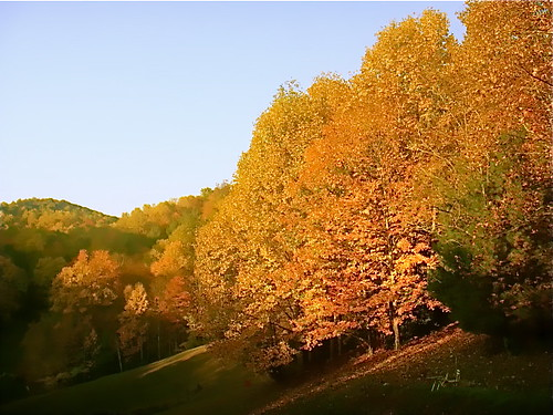 gold-leaves