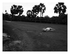 Mystic Freedom (allaerosol wants to smile always) Tags: street bw horse dark photography freedom cambodia siem reap mystical now angkor wat ricoh bnw rolling mystic 2010 grdiii instruction2