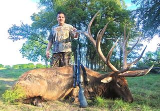 Elk 438
