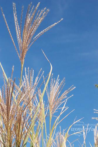 Grasses_Fall2