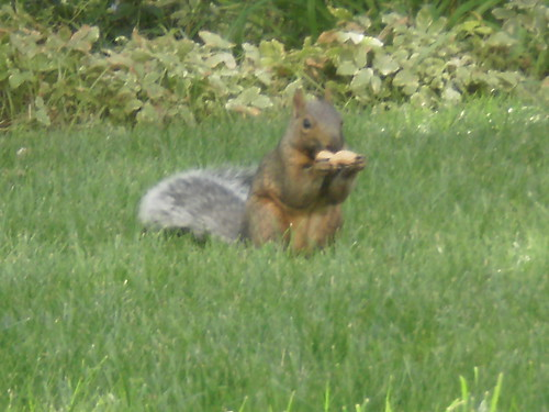 Yonge and Gloucester Squirrel (3)