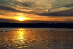 On Golden Pond (Doug Wallick) Tags: autumn sunset sky lake water minnesota clouds golden farm plymouth ducks mission medicine picnik lightroom a230 mygearandmepremium mygearandmebronze mygearandmesilver