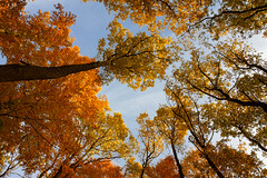 IMG_6337-519.jpg (miez!) Tags: november autumn trees oktober fall nature leaves forest canon germany geotagged eos gold licht october laub herbst 1750 sonne wald bäume baum deu rheinlandpfalz magicforest westerwald 50d zauberwald steinebach tamron1750 canoneos50d steinebachsieg geo:lat=5073802500 geo:lon=783071000