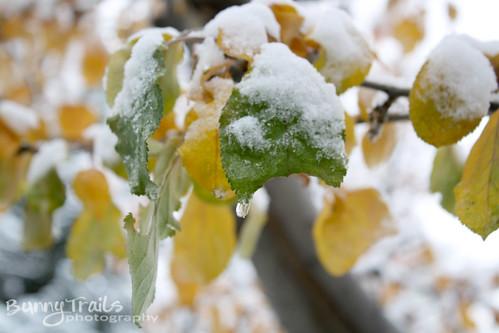 314-first snow