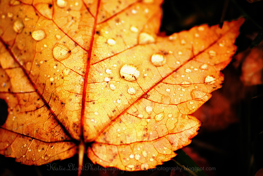 Leaf-with-water-drops-wm