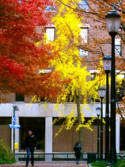 More Fall Colors (luidude) Tags: autumn fall philadelphia leaves campus pennsylvania centercity fallcolors pa philly ginko upenn universityofpennsylvania phila lowerquad canonpowershotsd950is