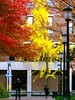 More Fall Colors (luidude) Tags: autumn fall philadelphia leaves campus pennsylvania centercity fallcolors pa philly ginko upenn universityofpennsylvania phila lowerquad canonpowershotsd950is