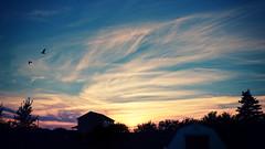 Whispy Sunset (paul.wesson) Tags: atlanticcanada birds canada cloudporn clouds eastcoast explorecanada explorens fuji fujixt1 gulls igcanada igersnovascotia imagesofnovascotia landscape night novascotia ohcanada outdoor silhouette sunset visitnovascotia wispy yhz easternpassage ns