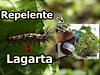 Lagarta na Couve e no Maracujá. Como Fazer Repelente... (portalminas) Tags: lagarta na couve e no maracujá como fazer repelente