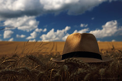 (tozofoto) Tags: europe hungary zala tozofoto canon landscape sky clouds field summer summertime colors lights shadows grain travelling travel holiday agriculture hat