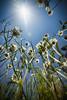 Heightened (flashfix) Tags: june282017 2017inphotos ottawa ontario canada canon canoneos5dmarkii 5dmarkii bokeh nature mothernature 17mm40mm daisy flowers upskirt blueskies sunshine sun tall stems flashfix flashfixphotography