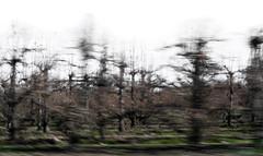 P E R A L (creonte05) Tags: explore eduardomiranda nikon d7100 2485mmf284d 2017 icm blur paisaje chile curico lontue landscape arbol ngc