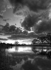 Dusk - Black and White (Jason_M_B) Tags: trees reflection water grass clouds blackwhite pond dusk canonefs1855mm jasonbrown december25 352 explored canoneos1000d