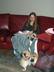 tammy with the pugs