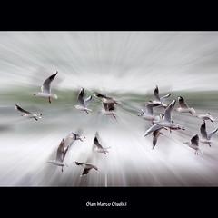 Volere....Volare... (gianmarco giudici) Tags: lumix fly interestingness artwork seagull gull explore gabbiano volare civitavecchia volerevolare esplora flickraward platinumheartaward lumixtz5 gianmarcogiudici