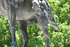 Los cojones de un pueblo (9/365) (pich urdaneta) Tags: horse statue photoshop project penis caballo libertad freedom dc washington nikon venezuela bolivar balls adobe 365 estatua chavez cojones lightroom proyecto pene urdaneta mcbo pich d80 pichicho maacaibo