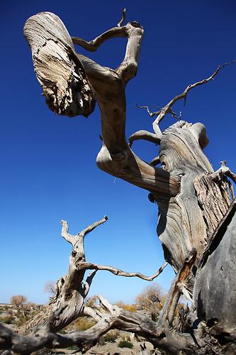IMG_2259-w tree