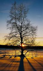 (_michael _ Jack) Tags: winter light sunset sky snow tree ice sunshine norway rays