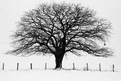 Winter time (Sven T.) Tags: schnee winter blackandwhite bw snow tree film field analog 35mm canon germany deutschland feld sw 135 schwarzweiss tyskland baum eos1 rhs asa800 fujineopan1600 schwarzweis kreisunna amalocoam74 ef702004lusm districtunna konicaminoltadimagescaneliteii frndenberganderruhr rolleihighspeed