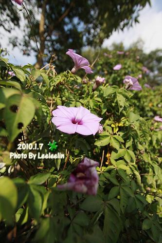 桃米紙教堂Paper Dome 鷹取Paper Dome紙教堂 桃米生態村社區