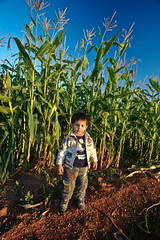 I will grow up ( ) Tags: africa me field corn south north bob east middle libya lybia libyan libia    fezzan          familygetty2010