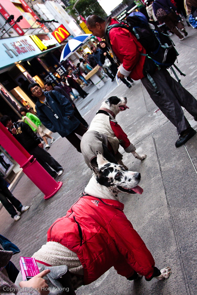 Who let the dog out? Woof! Woof! @ Ximending, Taipei, Taiwan