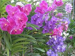 Orchid Farm (thomas pix) Tags: thailand chiangmai eyefi