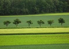 green stripes (**MIKA**) Tags: sachsen grün allee greenstripes ostritz grünestreifen