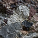 Rock365 : 24 01 2010 : Triassic breccia
