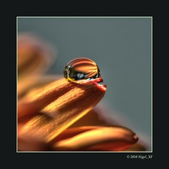... focussing the power of light (nigel_xf) Tags: orange macro nikon focus waterdrop d70s sigma drop nikond70s harmony makro nigel wassertropfen tropfen harmonie sigma150mm colorphotoaward nigelxf