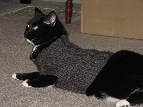 Infamous Cat Sweater