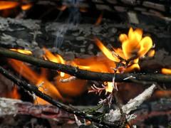 sit by the fire (frankieleon) Tags: wood fire interestingness interesting bestof flames warmth cc burning flame creativecommons heat popular consumerist frankieleon
