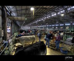 Bovine Barn Bonanza (Cliff_Baise) Tags: barn nikon cattle 1224mm hdr fortworth stockshow d700