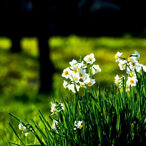 9420 : Narcissus2010 #1