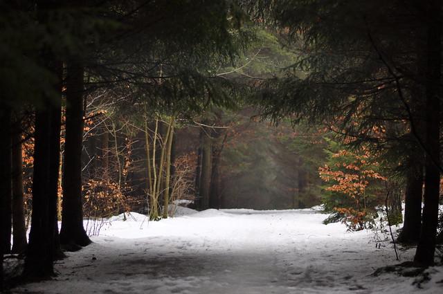 Long Way Through Snow