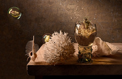 Soused Cowfish and Coral (kevsyd) Tags: stilllife coral shell bubble cowfish venuscomb kevinbest dutchstilllife