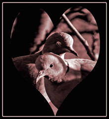 VALENTINE FOR FIFI (kenny barker) Tags: supershot colorphotoaward rubyphotographer awardtree miasbest