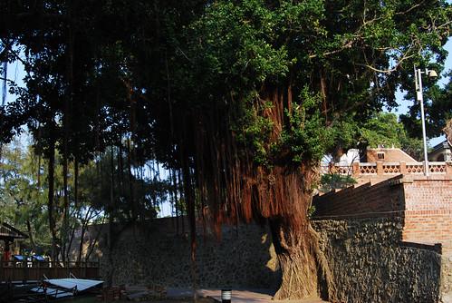 台南黑面琵鷺GO-2010020372