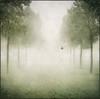 dreams of white (biancavanderwerf) Tags: mist snow green dutch birds fog square landscape book dove memories bianca dreamcatcher graphicmaster updatecollection ucreleased