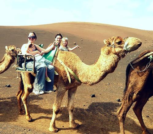 el camello que mas aguanta en el mundo