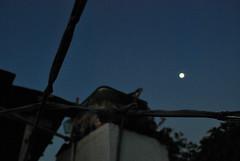 Click aleatrio do cu que anoitece (diegowarhol) Tags: casa anoitecer