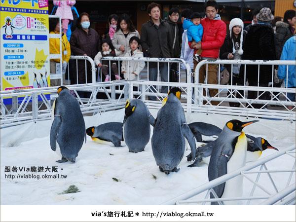 【via關西冬遊記】大阪海遊館~冬季限定!無敵可愛企鵝遊行來囉!4