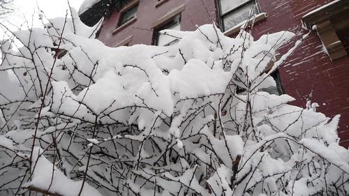 Web of snow