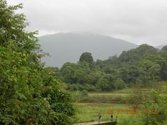 DSCN2977 (pingrajesh) Tags: nature forest hills madikeri