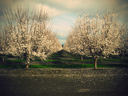 {57:365} things are starting to bloom