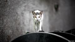 Voi Parlate, lo Gioco (Stephan Geyer) Tags: street old trash creek cat canon eyes feline soft dubai dof bokeh attack 85mm stray 5d canon5d straycat oof angrycat naif canoneos5d olddubai 8512 85l ef85mmf12lusm canon5dclassic canoneos5dclassic lifeinsevenpages stephangeyer omgitsgoingtokillme