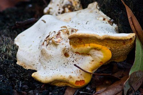Fungus Omelette