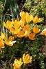 Early Spring in Stonesfield