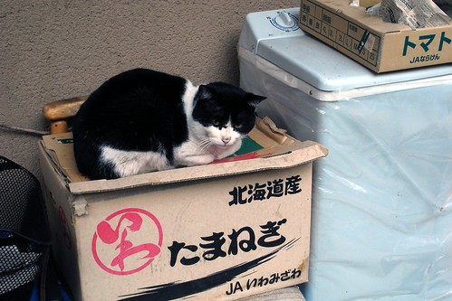 Today's Cat@2010-03-07
