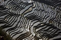 [フリー画像] 自然・風景, 田畑・農場, 中華人民共和国, 棚田, 201007210100